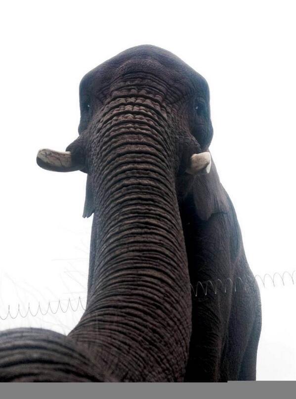 Слоновое селфи